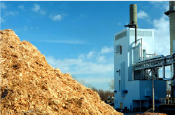 Biomass Congeneration